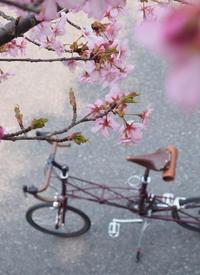 さくらと。 - おもいでは自転車とともに
