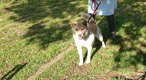 6月16日 お散歩ボランティアレポート - お散歩だっ♪ ~千葉県動物愛護センター(本所)でのお散歩ボランティア~