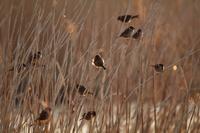 スズメと白鳥 - 田舎の自然