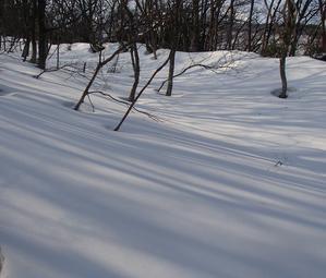 野田ガ山スキー登山(単独) - アウトドア菊信の世界