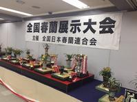 全春連展2017                        No.1769 - 東洋蘭風来記奥部屋