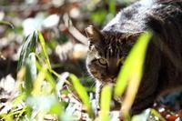 ネコさんが来る! - 平凡な日々の中で