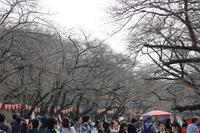 3月の連休 上野公園&上野動物園の混雑状況を見てきました。桜の開花状況もあわせて! - 動物園のど!
