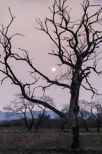 阿武隈川物語・・・・枯れ木と太陽 - 花のこみち