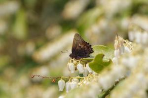 春の蝶初見記録更新2種 - 蝶と蜻蛉の撮影日記