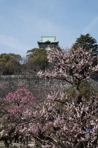 大阪城梅林 - とりあえず撮ってみました