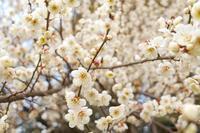 春 - 五句 - 俳句手帳