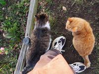 猫たちに好かれた日 - 光の音色を聞きながら Ⅱ