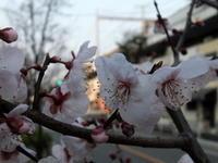 3月19日(日)、今日も良いお天気の神戸の朝です - フォトカフェ情報