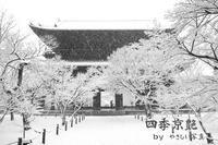 四季京艶 冬 --Kyoto Four Seasons-- a snowscape - 四季京艶