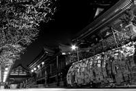 湯島の夜に - Today's one photograph