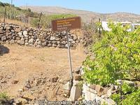 エンボリオスの初期キリスト教洗礼所の遺跡 - 日刊ギリシャ檸檬の森 古代都市を行くタイムトラベラー