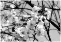 春の雨 ② :俳句 - always over the moon
