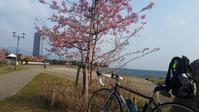 お彼岸と梅と琵琶湖 - 近江ポタレレ日記(琵琶湖)自転車二人旅