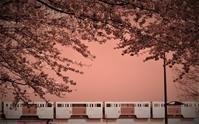 さくら咲くころ - いけのさい~子育てと教育の一隅を照らす