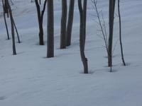 """雪解けが進む """"根開き""""の光景 - ときどきの記 小樽の出版社""""ウィルダネス""""のブログ"""