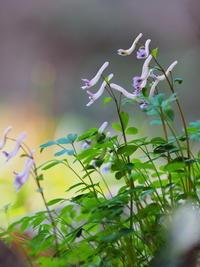 山路を歩けば春の香りが - 野路の花散策