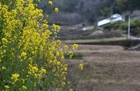 堂の坂の春 - ふらりぶらりの旅日記