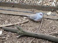公園の鳥舎の鳥たち - つれづれ日記
