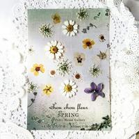 押し花のイベント - みどりのある暮らし  【植物を取り入れてENJOY・EASY・ECOLOGYな3Eライフ☆】