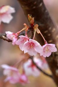 デンパーク~花木その1 - miyabine's フォト日記2~身の周りのきれい・可愛い・面白い~