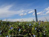 ポートタワーとオオイヌノフグリ - ネコと裏山日記