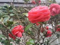 ほんとの春よ来い 高橋大輔「漂流の島 江戸時代の鳥島漂流民たちを追う」 - 梟通信~ホンの戯言