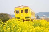 いすみ鉄道の菜の花畑 - そよ風のおもむくままに