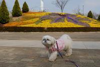 お花いっぱい(^-^) - ポロと歩く