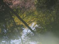 鮒の池 - 鹿深の森