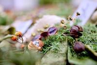 Jcotton 個展「時を刻む植物たち」 - Gallery I