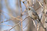 たくさんの小鳥たち - Bird-Watching Journal