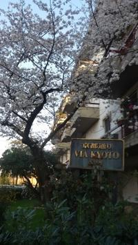 Firenzeで感じる日本♡ - OLMI夫人の独りゴチ