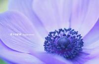 春の花たち・・ - 花々の記憶