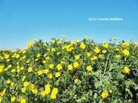 ただいまシチリアは天国です♪ - La Tavola Siciliana  ~美味しい&幸せなシチリアの食卓~