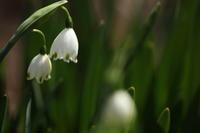 早春賦 - 「せ」の写真集 刹那の光