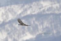 圧倒的な威圧感 - healing-bird