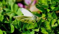 春が来た その3 - 紀州里山の蝶たち