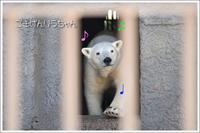 ほっきょくぐまのいちにち 2017/03/19 - メタのマクロ視点な奇跡なんて白熊の為