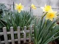 庭の花・蕾を片っ端から撮ってみた - 【出逢いの花々】