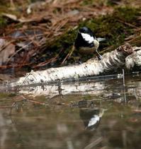 山の水場にいろいろと・・・ - 一期一会の野鳥たち