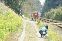 菜の花の小湊鉄道へ~⑥里山トロッコ折り返し - 柳に雪折れなし!Ⅱ