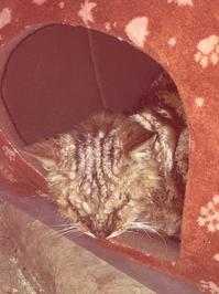 カイセン猫 - ゆきももこの猫夢日記