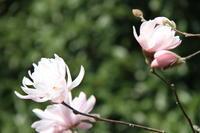 公園に咲く花 - お散歩写真     O-edo line