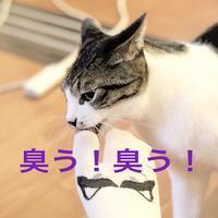 にゃんこ劇場「その猫凶暴につき」 - ゆきなそう  猫とガーデニングの日記