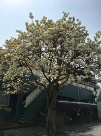 お彼岸。──「亀屋本店」@武蔵小金井 - Welcome to Koro's Garden!