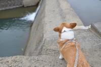 二日目の夕方のお散歩 - むーちゃんパパのブログ 3