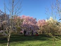 ロンドンの春 3/22 - つくしんぼ日記 ~徒然編~