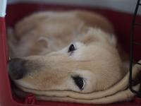 17年3月21日 かぼちゃミルク♪ - 旅行犬 さくら 桃子 あんず 日記