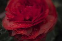 Flowers (4cut) -     ~風に乗って~    Present